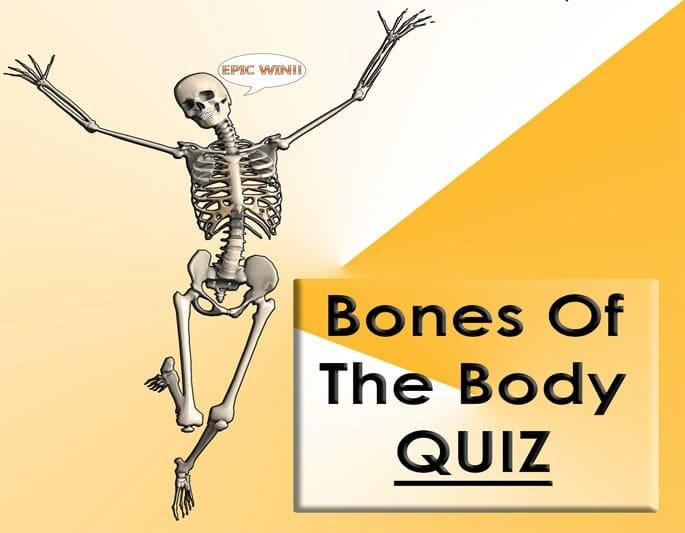 enjoy our bones of the body quiz
