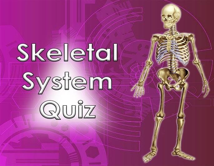 skeletal system quiz banner